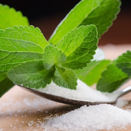 stevia rebaudiana - the sugar plant